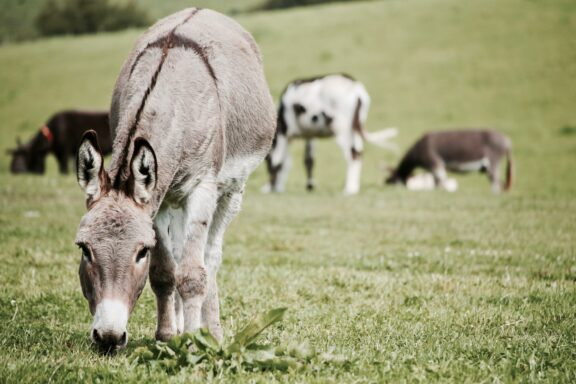 agriculture-animal-animal-photography-animals-598757 (1)