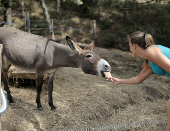 selective-focus-of-woman-feeding-a-donkey-3769983